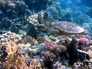 turtle-185484_640
