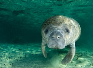 See Manatees in Blue Spring State Park