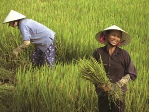 TIC_VIETNAM_Mekong Delta 1 low res