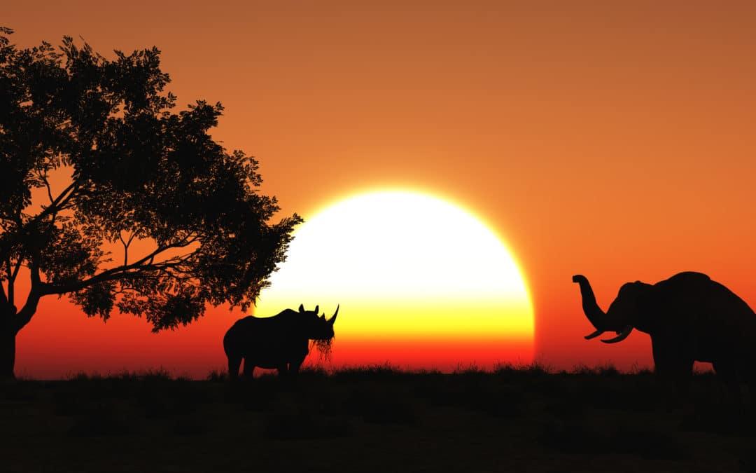 Africa Destinations 2020